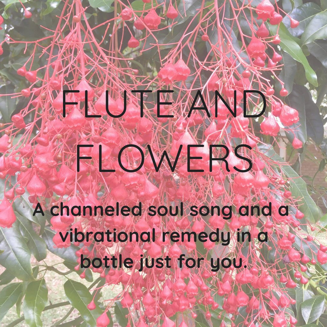 Flute Song And Flower Remedy Tricia Woods